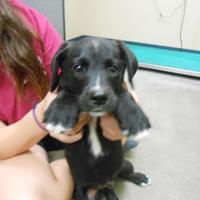 Adopt A Pet :: Clyde - Quincy, IL