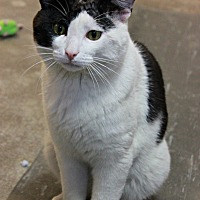 Adopt A Pet :: Domino - New Richmond,, WI