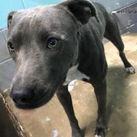 Adopt A Pet :: Plymel - Moultrie, GA
