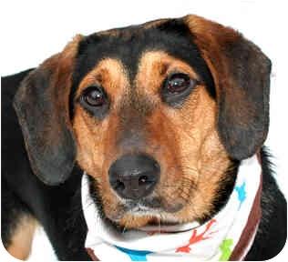 Hound (Unknown Type) Mix Dog for adoption in Cincinnati, Ohio - Lucy