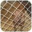 Photo 2 - Labrador Retriever Dog for adoption in Grand Saline, Texas - Cocoa
