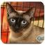 Photo 3 - Siamese Cat for adoption in Yorba Linda, California - Ariel and Beau