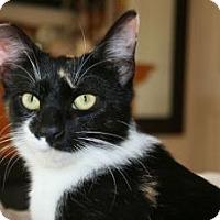 Adopt A Pet :: Sweet Pea - Canoga Park, CA