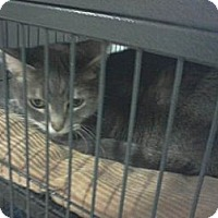 Adopt A Pet :: Lola - West Dundee, IL