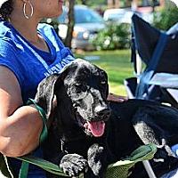 Adopt A Pet :: Murray - Cumming, GA