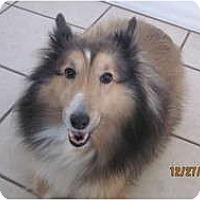 Adopt A Pet :: Avery - apache junction, AZ