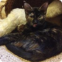 Adopt A Pet :: Roxy - Chandler, AZ