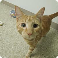 Adopt A Pet :: Spikey - Medina, OH
