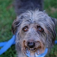 Adopt A Pet :: Mozart - Santa Monica, CA