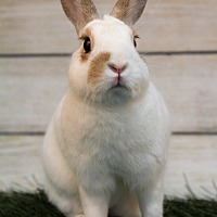 Polish for adoption in San Diego, California - Bianca