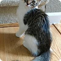 Adopt A Pet :: Kensi - North Highlands, CA