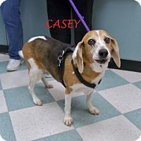 Adopt A Pet :: CASEY - Ventnor City, NJ