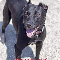 Adopt A Pet :: Chunk - St. Clair Shores, MI