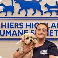 Adopt A Pet :: Conrad - Cashiers, NC