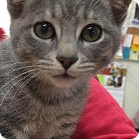 Adopt A Pet :: Skye - Buhl, ID