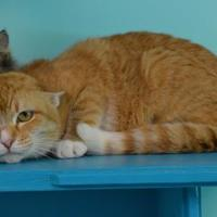 Domestic Shorthair/Domestic Shorthair Mix Cat for adoption in Elkhorn, Wisconsin - Mattie