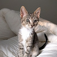Adopt A Pet :: Ziggy - Duluth, GA