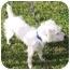 Photo 3 - Jack Russell Terrier Dog for adoption in Phoenix, Arizona - ARIES