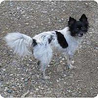 Adopt A Pet :: Missy - Chandlersville, OH