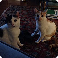Adopt A Pet :: Blake&Scotch - Laguna Woods, CA