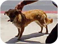 Spaniel (Unknown Type) Mix Dog for adoption in Spring Valley, California - Lucky