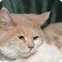 Adopt A Pet :: Dan - Medina, OH