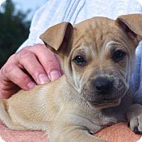Adopt A Pet :: Brontë'*ADOPTION PENDING* - Mill Creek, WA
