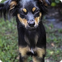 Adopt A Pet :: Blerney - Jupiter, FL