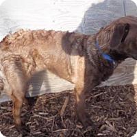 Adopt A Pet :: Murphy - Logan, UT