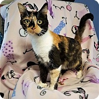 Adopt A Pet :: Digits - Murphysboro, IL