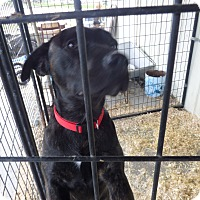 Adopt A Pet :: Nigel - Chewelah, WA