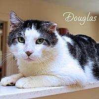 Adopt A Pet :: Douglas - Sarasota, FL