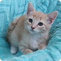 Adopt A Pet :: JULIUS - Newport Beach, CA
