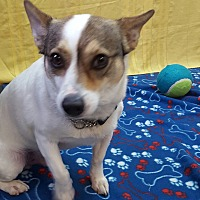Adopt A Pet :: Scooter - Hawk Point, MO