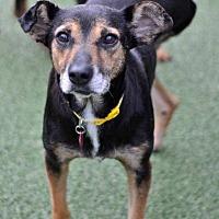 Adopt A Pet :: Angela - San Francisco, CA
