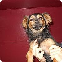 Adopt A Pet :: Callie - Conyers, GA