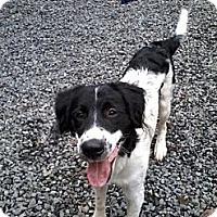 Adopt A Pet :: Jasper - Pineville, NC