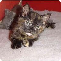 Adopt A Pet :: Birdie - Davis, CA
