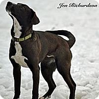 Adopt A Pet :: Sadie - PENDING, in Maine - kennebunkport, ME