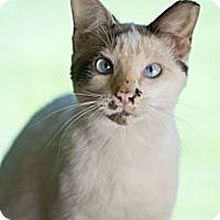 Adopt A Pet :: Pettis - Grand Rapids, MI