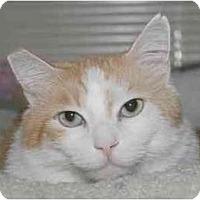 Adopt A Pet :: Julius - Portland, OR