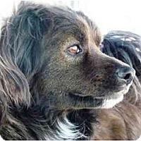 Adopt A Pet :: Puck - YERINGTON, NV