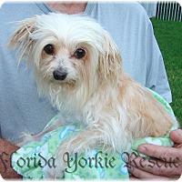 Adopt A Pet :: May-Ling - Palm City, FL