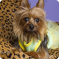 Adopt A Pet :: Desiree (Desi) - Baton Rouge, LA
