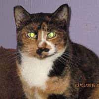 Adopt A Pet :: Biscotti - Coos Bay, OR
