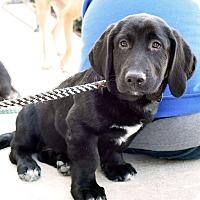 Adopt A Pet :: Peanut - Marietta, GA