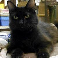 Adopt A Pet :: Midnight - Oskaloosa, IA