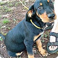 Adopt A Pet :: Ethel Mertz - Cherry Hill, NJ