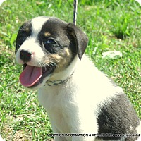 Adopt A Pet :: Lilly/Adopted - PRINCETON, KY