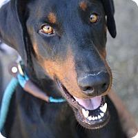 Adopt A Pet :: Benjamin - Fillmore, CA